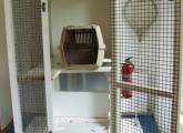 In diesem Käfig musste Joey neun Jahre leben