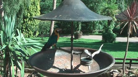 Artwidrige Papageienhaltung