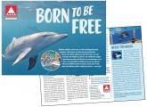 flyer-delfin